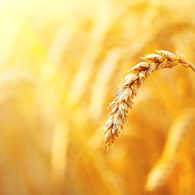 q_agroalimentare